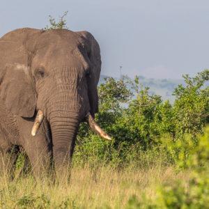 Uganda – zwierzaki