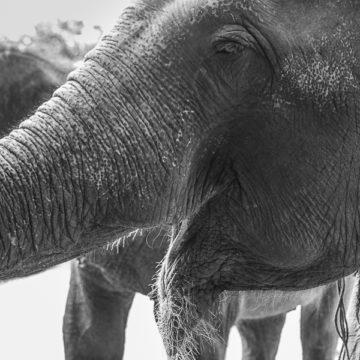Pomalować słonia, przytulić tygrysa…