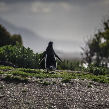 Ushuaia – zapraszamy na Koniec Świata!