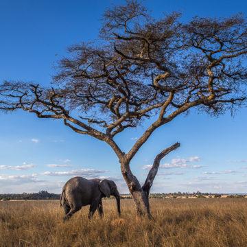Zimbabwe – tworząc swoją własną historię